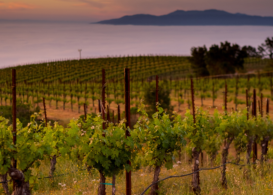 Monte Bello Road 2 - Dorcich Family Vineyard