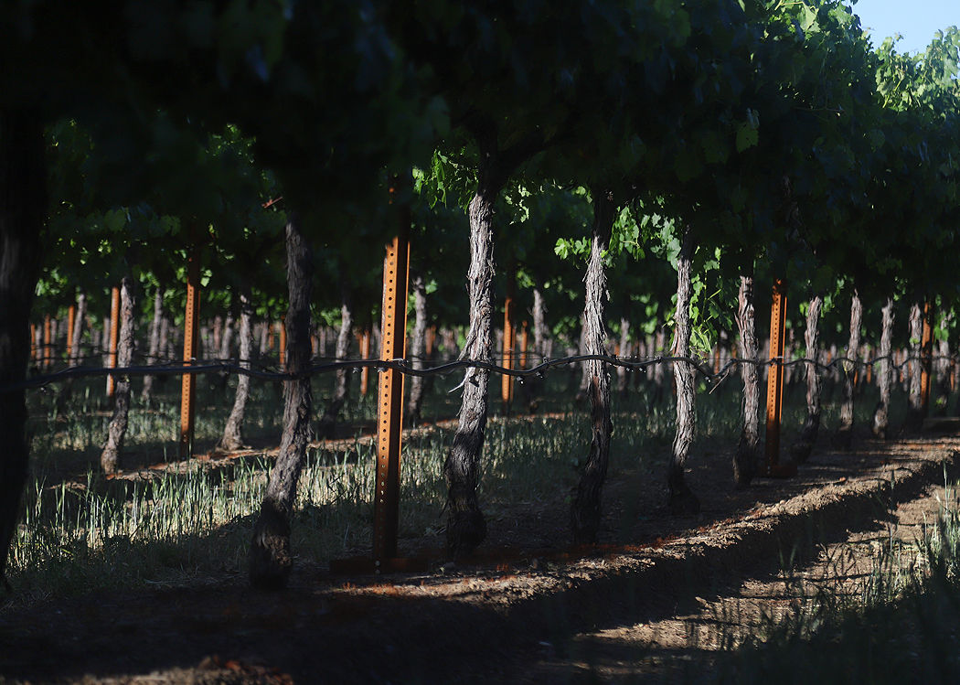 Monte Bello Road - Dorcich Family Vineyard