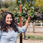 Terah Bajjealieh inspecting grapes on the vine - Dorcich Family Vineyards